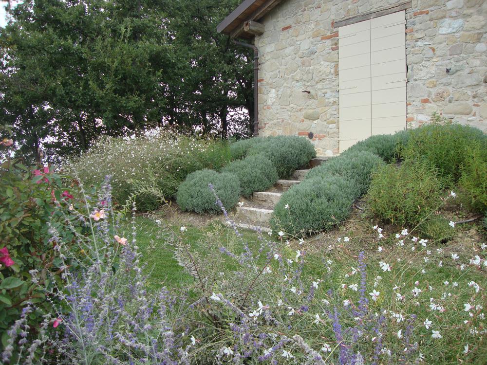 Giardino in collina i giardini e le fronde vivaio for Soluzioni giardino in pendenza