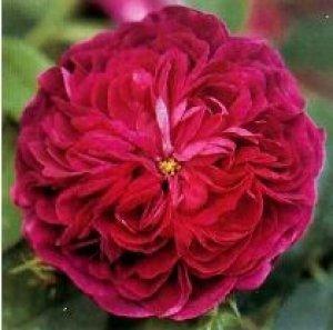 rosa charles de mills