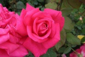 rosa lolita lempicka