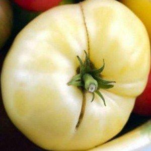 pomodoro grosse blanche