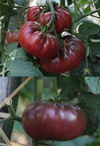 pomodoro nero purple calabash