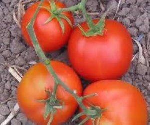 pomodoro thessaloniki