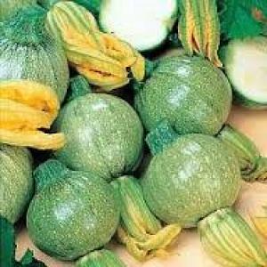 zucchino tondo di toscana