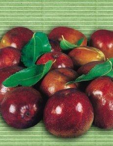 giuggiolo mela